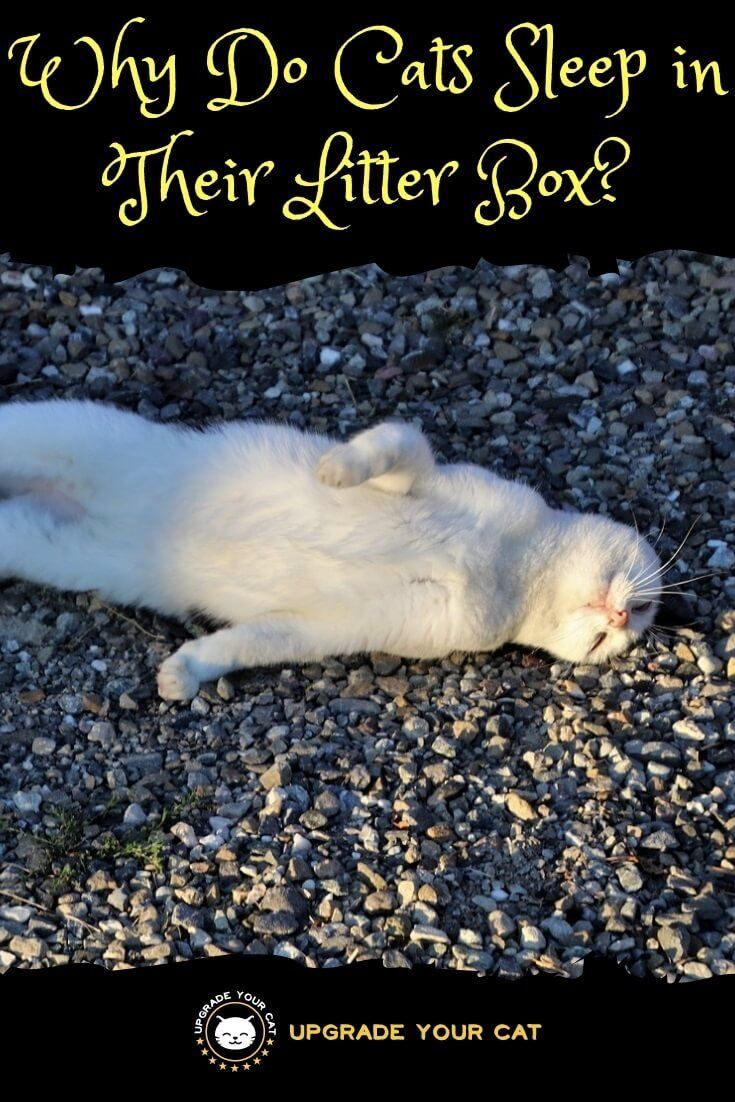 Why Do Cats Sleep In Their Litter Box 6 Reasons For This Strange Behavior Upgrade Your Cat Cat Sleeping Best Cat Litter Pet Bereavement Dogs