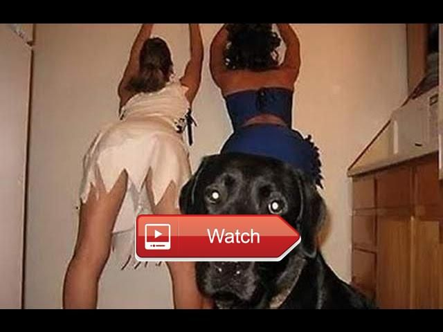 🐙 Funny Animals Funny Dogs Videos Funny Animals Video Compilation 🐵 Funny Animals Funny Dogs Videos Funny Animals Video… #funnyanimals