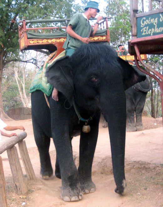 Black Elephant, Sri Lanka.  I've spent a fair amount of time in Sri Lanka but never seen one like this!