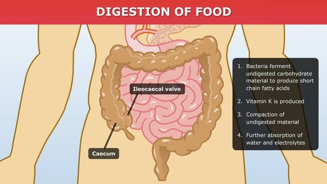 Digestion of food - INTERACTIVE. The digestive system plays a critical role in breaking down large food molecules into smaller readily absorbable units. This animated video details how food is processed as it moves through the digestive system.