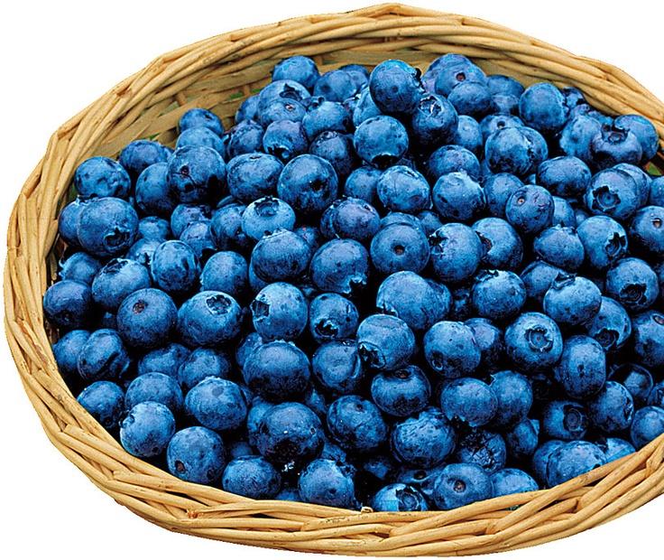 giant blueberries 39 goldtraube 39. Black Bedroom Furniture Sets. Home Design Ideas