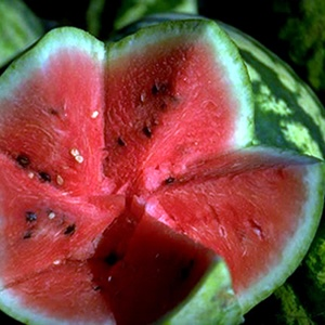 Commercial Growers? Ripeness Guide to Help Pick Good Melons