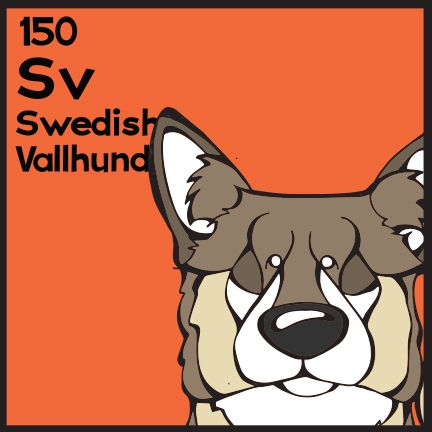 The 150th Elemutt of The Dog Table is the Swedish Vallhund.  The Dog Table Poster features illustrations of 186 dog breeds. Dogs are organized in a similar layout and structure to the Periodic Table.  #dogsofpinterest #SwedishVallhund BUY THE DOG TABLE POSTER  http://thedogtable.com