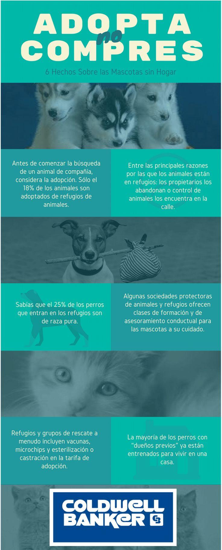 ¿Quieres un mejor amigo en tu hogar? Adopta ellos te necesitan. #lainmobiliariaazul #cbcolombia #adoptanocompres