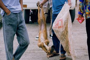 Take action on the dog meat trade – write to the President of the Philippines