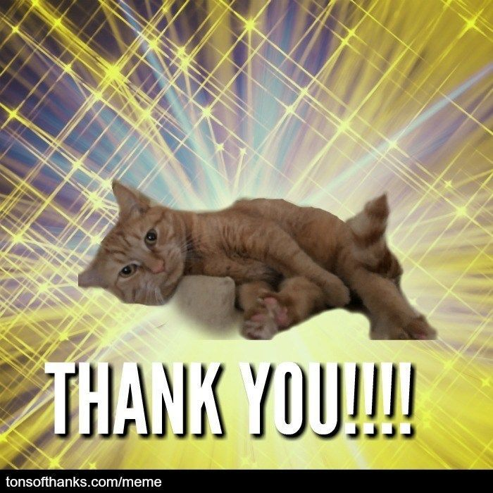 51 Nice Thank You Memes With Cats Thank You Cat Meme Thank You Memes Cat Memes