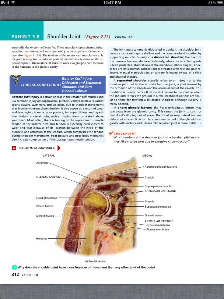 39 best Chapter 9, Joints images on Pinterest | Book, Books and Anatomy