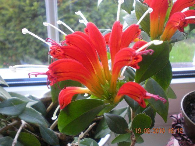 Zwisajace Kwiaty Doniczkowe Plants