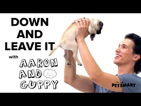 PetSmart Puppy Training: Down and Leave Cues - YouTube