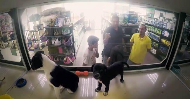Pet shop trocou cães à venda por cães abandonados. Os clientes não perceberam. Veja o que aconteceu.