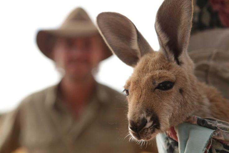 Kangaroo Sanctuary, Alice Springs - Brolga with a Joey