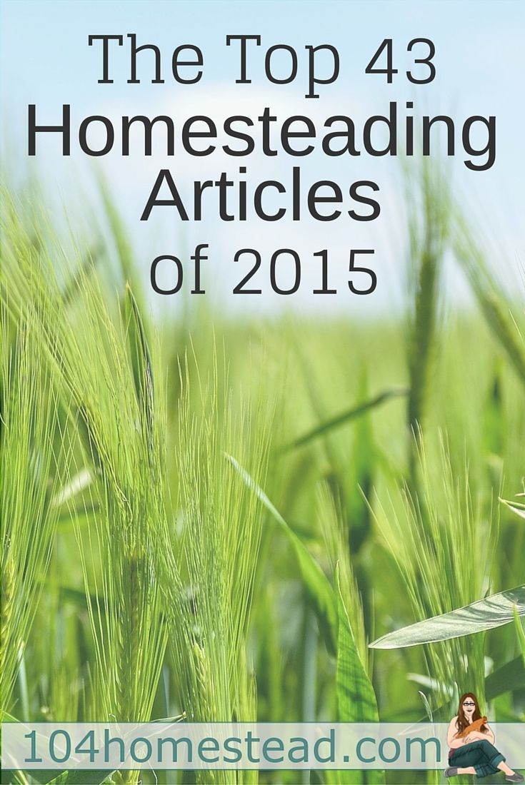 Whether you are a backyard hobby homesteader or an avid homesteader on your journey to live off-grid, these are the top homesteading articles you want to be reading.: