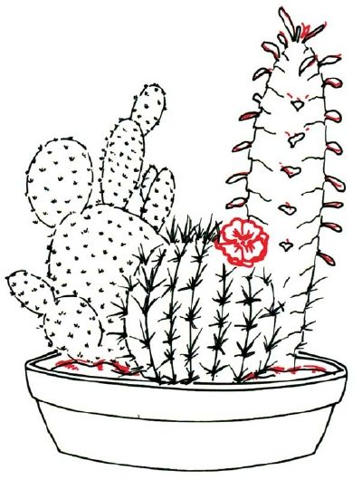 Cactus Flower Line Drawing : Best cactus illustrations images on pinterest