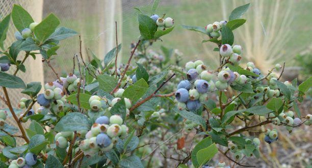 Blog  »  My Productive Backyard » Learn to Grow your Own Food at Home