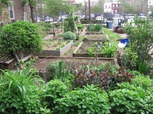 14 best community gardens images on Pinterest | Urban homesteading ...