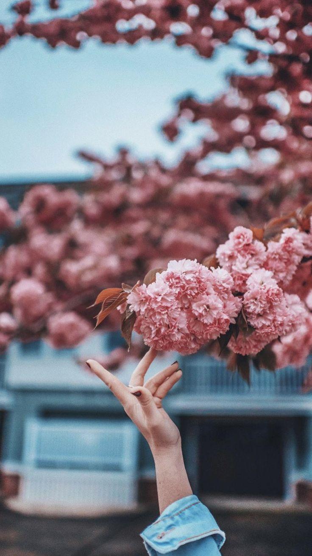 Pink Flowers Tree Photography Wallpaper Brandon Woelfel Spring Wallpaper