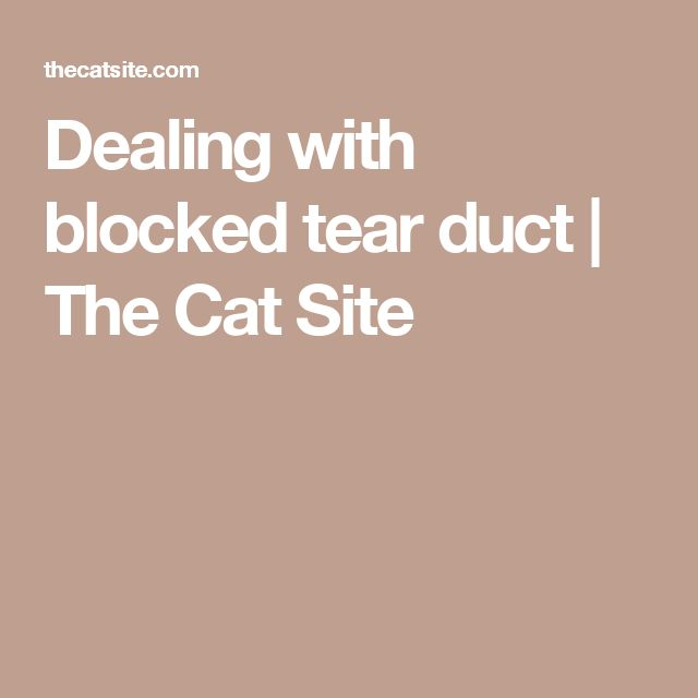 Dealing with blocked tear duct | The Cat Site