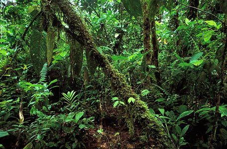Tropical Rainforest Climate | ... year-round, a tropical rainforest in Ecuador is lush with vegetation