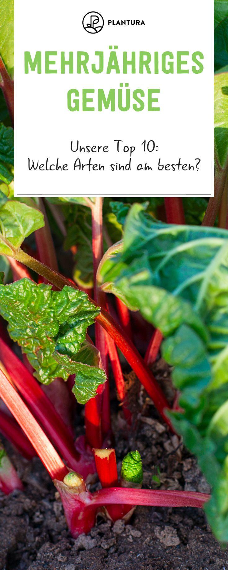 Mehrjähriges Gemüse: Die 10 besten Arten
