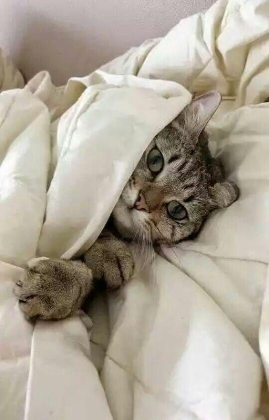 quien a en mi cama...?