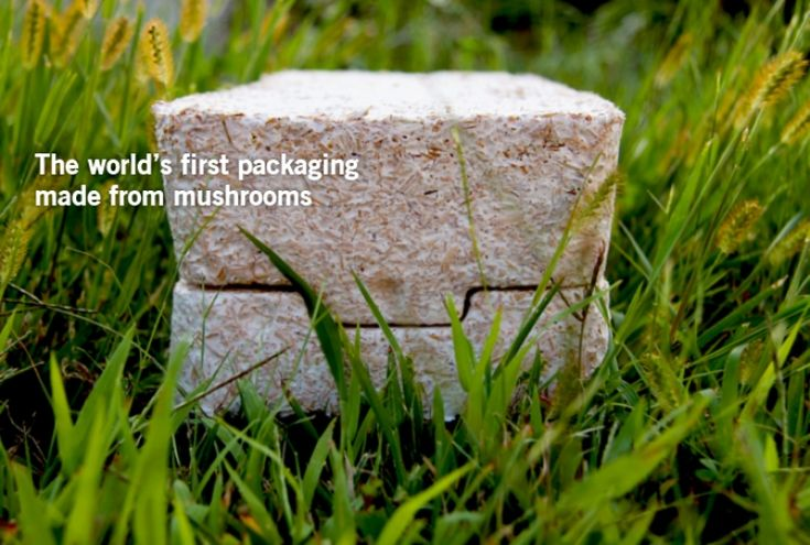 EcoCradle: Biodegradable mushroom packaging.    EcoCradle is derived from mushrooms and is an exciting new compostable alternative to styrofoam packaging. Ecovative Design was founded to produce alternative packing material out of sustainable materials such as mushroom roots.