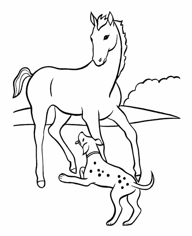 65 Best Horses Images On Pinterest