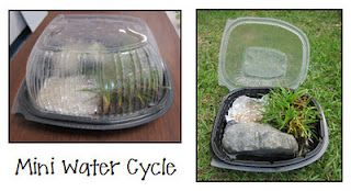 Mini water cycles using a rotisserie container