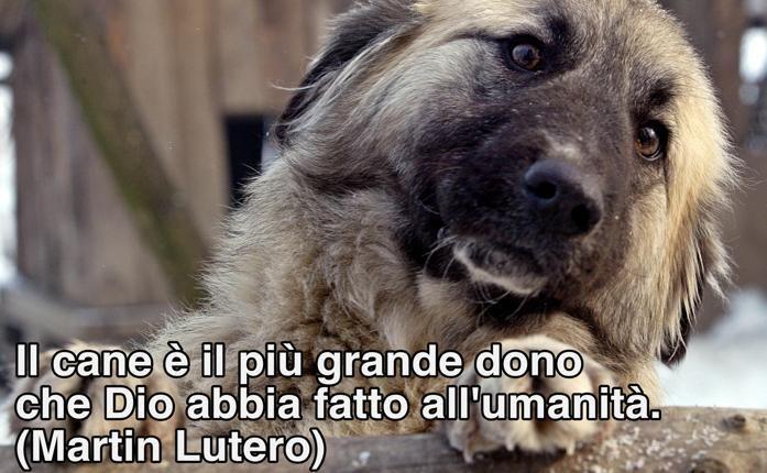 Il cane è il più grande dono che...