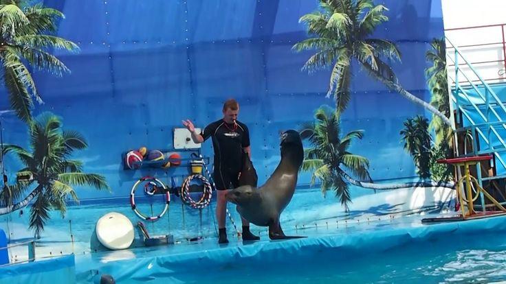 Влог: день 4 на Черном море 1 часть/катаемся на машинках/ дельфинарий   ...