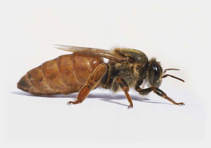 queen bee - photo #19