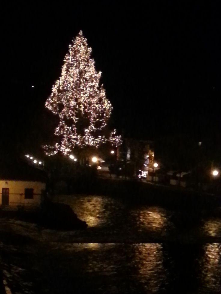 Albero di natale di Borghetto sul Mincio! Un'antica e bellissima sequoia che ogni anno splende nel periodo natalizio.