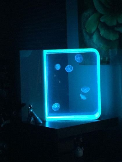 best 25 jellyfish tank ideas on pinterest jelly tank