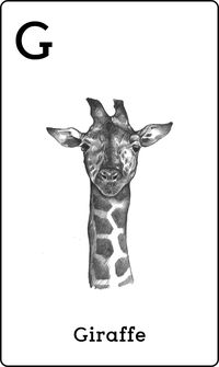 Animal 4D+ Card Giraffe
