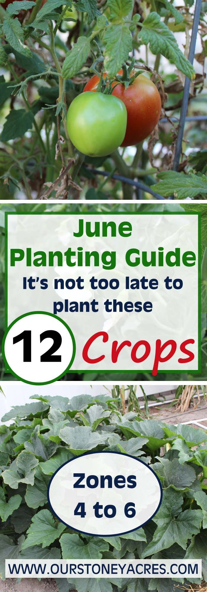 It's not too late to get these 12 vegetables planted in your garden. You can plant all of these crops any time in the month of June and still expect a decent harvest!