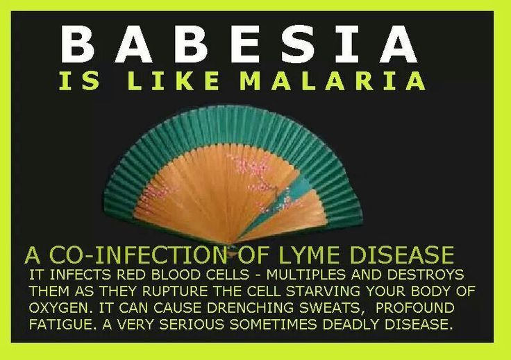 Babesia--one of my worst co-infections. Gotta focus on treating, & get rid of this one before the others I'm thinking.