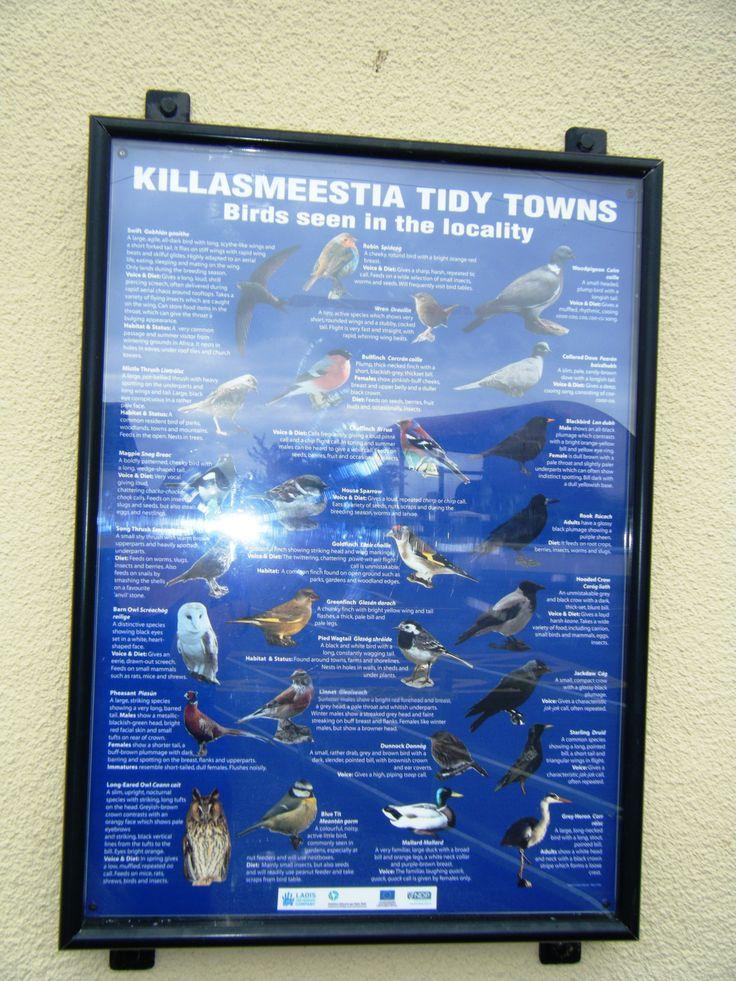 Wildlife in Killasmeestia, Co. Laois