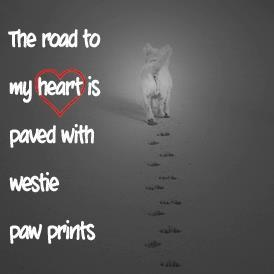My heart is covered in Westie footprints...and nose prints.