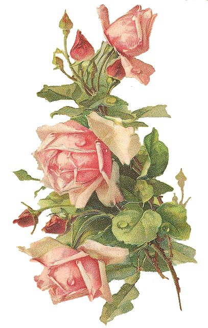 Wings of Whimsy: Pink Roses - Catherine Klein - PNG (transparent background) - free for personal use #vintage #victorian