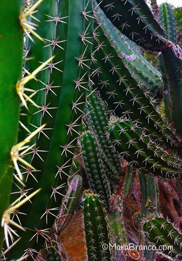 Cactus-2 @marabranco.com
