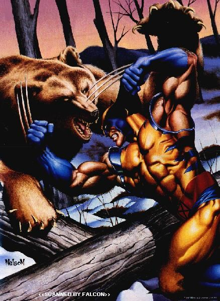 The Wolverine vs Bear - See best of PHOTOS of the WOLVERINE film  http://www.wildsoundmovies.com/the_wolverine_vs_bear.html