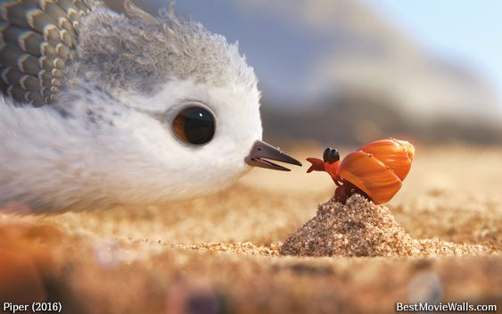 Hello, what are you, little friend? :] #Pixar's #Piper short move
