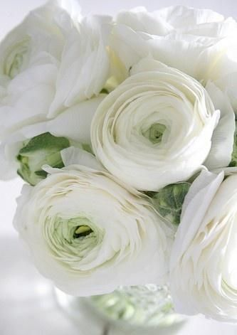 Stark White Roses With a Hint Of Green. ~ Lovely...........