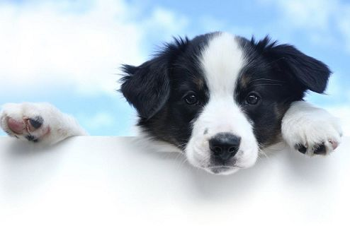 Christmas Gift Ideas: 2017 PETstock Calendar featuring rescue animals