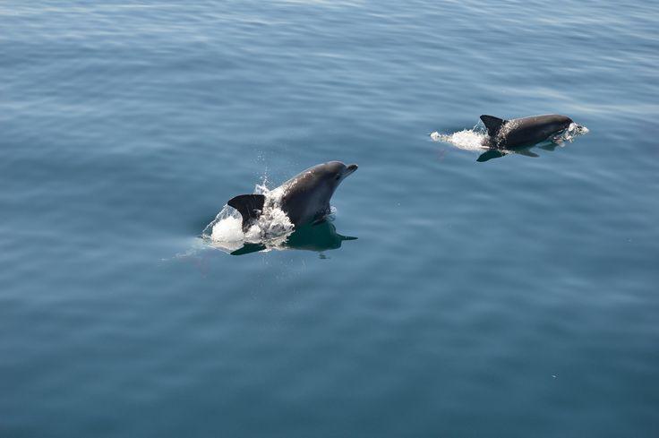 https://flic.kr/p/rxRdzB | Dolphin watch, Jervis Bay, NSW