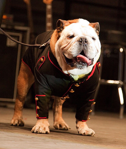 Tillman the skating Bulldog was inducted as an honorary Marine, Private 1st Class, at Sky Ball in the American Airlines Hangar in Dallas, Texas over the weekend. Congrats!