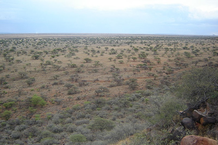Loopgrawe. This Day in History: Dec 11, 1899: The Battle of Magersfontein http://dingeengoete.blogspot.com/