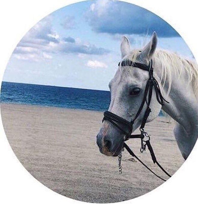 افتارات خلفيات خيول On Instagram اكسبلور خلفيات Beautiful Arabian Horses Horse Wallpaper Horse Pictures
