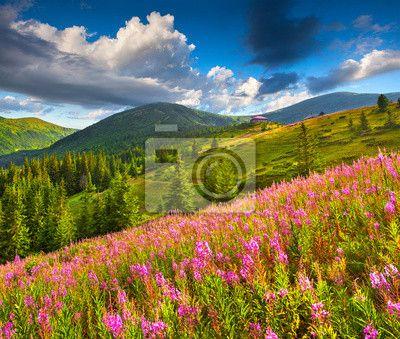 Fotobehang Mooie zomer landschap in de bergen met roze bloemen