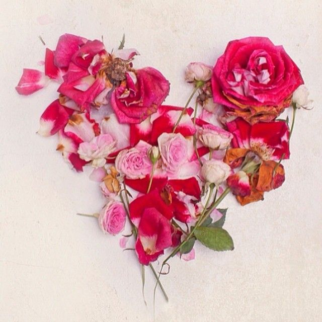 The 25+ best Happy valentines day rose ideas on Pinterest   Happy ...