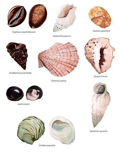 moluscos 1 by Geraldine MacKinnon